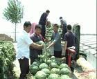 供应用于西瓜的西瓜批发基地,陕西大荔西瓜基地,陕西西瓜大量上市,西瓜产地行情,西瓜批发价格图片