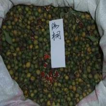 供应垂丝海棠种子,垂丝海棠苗,别名:海棠、海棠花、垂枝海棠