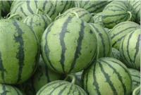 河南西瓜蔬菜交易市场 西瓜蔬菜市场联系电话 周口西瓜直销价图片