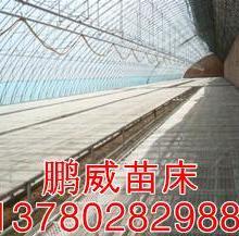 供应温室育苗床温室植床网温室植床价格