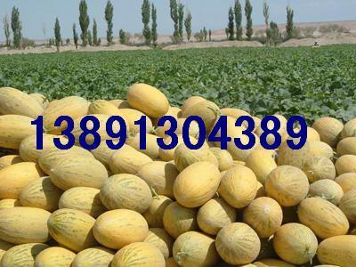 生鲜水果大棚哈密瓜销售