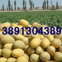 供应生鲜水果-大棚哈密瓜基地/陕西哈密瓜产地生鲜水果大棚哈密瓜图片