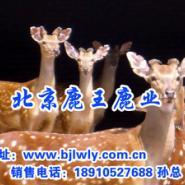 供应2012年安徽石台县梅花鹿