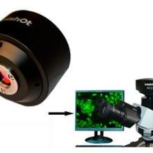 供应高灵敏度摄像头CCDMC20