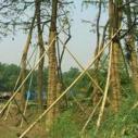 河北草绳制造商图片
