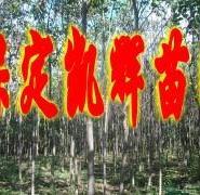 楸树种植地图片