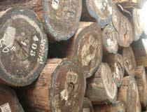 供应木材进口报关代理操作图片