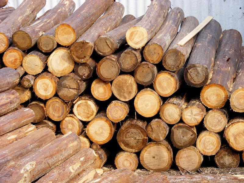 供应东莞木材进口代理图片