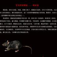 徐州KTV灭鼠图片