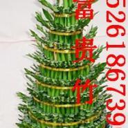 供应南京花卉种植/绿植租摆/园林绿化