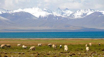 西藏旅游 报价 西藏旅游去哪 西藏火车旅游 西藏... 西藏旅游