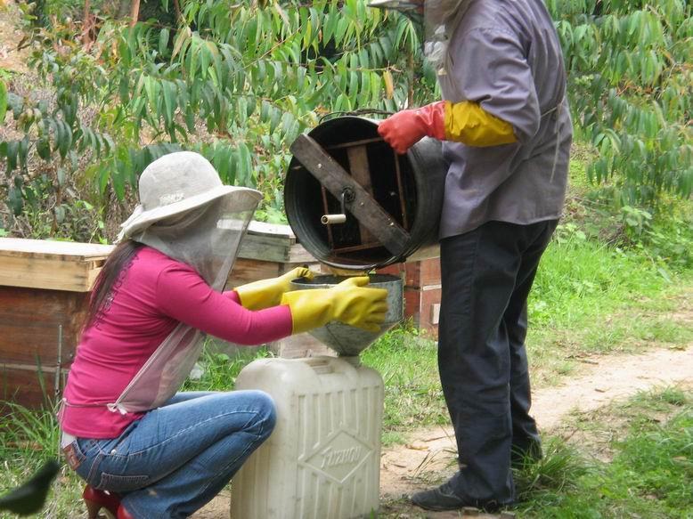 供应中蜂荔枝蜂蜜
