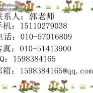 天津一级建造师挂靠一级建筑建造师图片