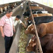 供应河南郑州小尾寒羊¥养牛基地¥养羊技术图片