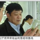 金线莲培养瓶报价出厂价格价格信息