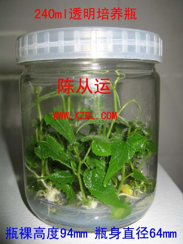云南培养玻璃瓶报价出厂价含税价
