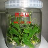徐州培养瓶生产厂江苏培养玻璃瓶厂