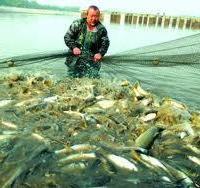 水产品鱼虾家禽专用饲料添加剂