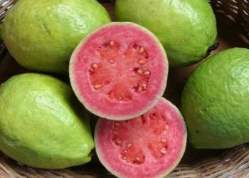 供应批发石榴 批发番石榴 海南石榴 批发绿色石榴 健康热带水果图片图片