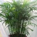 室内绿植养护图片