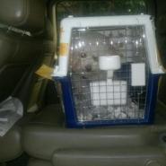 宠物出入境服务机构图片