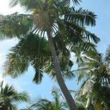 供应巴西棕榈蜡乳液批发