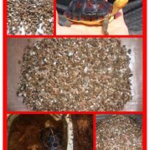 供应龟鳖孵化用特制蛭石粉