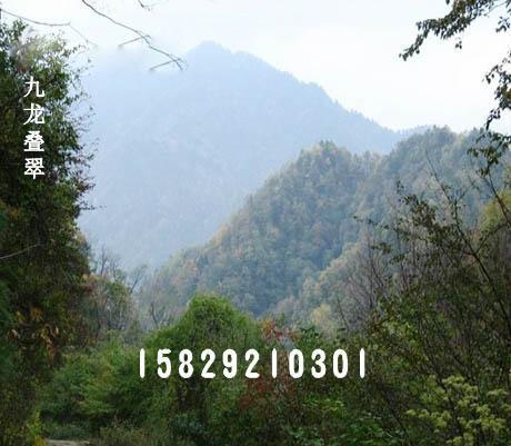供应西安墓园【九龙山公墓】  上一条:九龙山城市森林公园 下一条图片