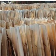 供应杨木单板皮