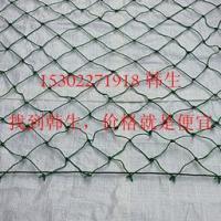 供应40尺高柜集装箱网