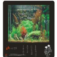 海水鱼缸图片