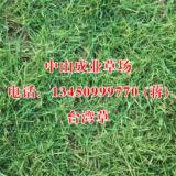 广东台湾草、种植、基地、批发价格【广东成业草坪种植基地】