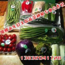 供应河北蔬菜种植基地,无公害蔬菜基地,超市蔬菜直供基地,邯郸永年义保图片