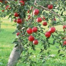 供应果树使用的肥料