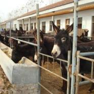哪有大型肉驴养殖场图片