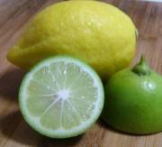 供应柠檬店用青柠檬在哪买?