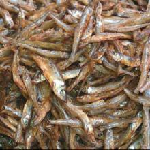 供应鱼干批发叼子鱼鲦孒