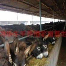 供应现在饲养肉驴的市场怎么样批发