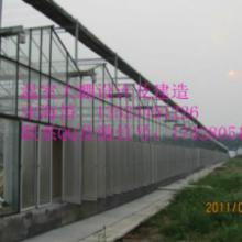 供应赤峰连栋温室/内蒙古赤峰温室大棚/赤峰玻璃温室阳光板大棚安装设计图片
