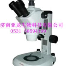 供应显微镜  组培设备