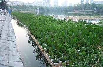 供应北京水生植物种植公司,荷花种植,睡莲种植,芦苇种植,浮岛种植