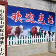 供应现在毛驴多少钱一斤肉驴价格批发