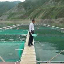 供应虹鳟鱼成鱼,1斤到3斤左右的都有,洮河生态养殖。量大优惠大!