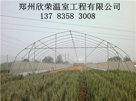 各种项铹����9�%���yf�z_蔬菜大棚建造铹图片