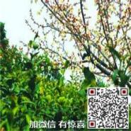 苏州东山碧螺春铁罐图片
