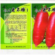 供应奇山冈水萝卜种子萝卜中珍品萝卜