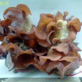 供应毛木耳菌种/毛木耳菌种批发/哪里有毛木耳菌种批发?