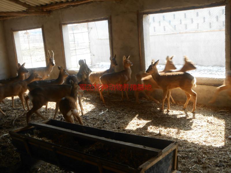 军杰特种动物养殖基地