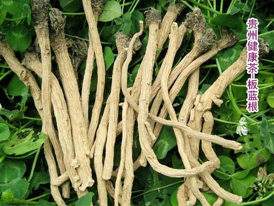 板蓝根施用有机肥的方法