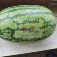 中原瑞龙F1少籽西瓜种子图片